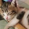 インスタのおすすめ一覧を猫だらけにする方法