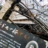 横浜元町のシドモア桜(谷戸橋付近)2019