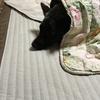 甲斐犬サンは勤労感謝でも働かない〜( ^ω^ )感謝シテルヨゥ。