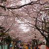 2010年04月03日「桜の便り」