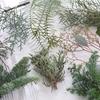 クリスマスリース:さまざまなグリーン