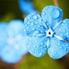 ◆お題◆実は、雨の日は体が楽なのだ