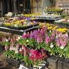 ミモザ・ガーデンの日記 春の花の苗