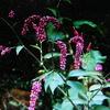 10月19日花と花言葉・歌句
