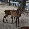 鹿と大仏と私