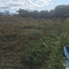 田んぼの草刈り・・。