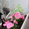 青島植物展示館