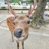 Deer!Deer!Deer!🦌