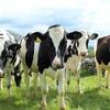 牛を見分ける大会で過去最高得点を叩き出して県1位になった話