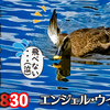 0830【個性的なカルガモ達】奇形珍色怪我羽ボロ。カルガモの水浴び。ガビチョウ捕食、ハクセキレイとセグロセキレイ。ハラビロカマキリも。【身近な生き物語】今日撮り野鳥動画まとめ
