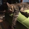 シニア猫向けフードを各種試してみた結果