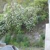5月10日(金)の緑の様子