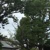 【週末3週目:木登りとゲーム】
