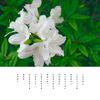 曇り空 ツツジの花は 君より白く