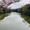 若宮池(福岡県福岡)