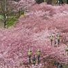 【参加者募集】3/12は桜まつり&ワカサギを楽しむ観光ライド! 一緒に走って、目と口で春の訪れを堪能しませんか?