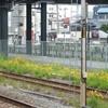 駅の黄色い花