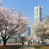 横浜名所桜満開散歩の記・その1