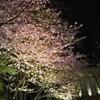 夜桜ピアリ