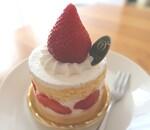 タカノフルーツパーラーのケーキ!フルーツたっぷりでお誕生日におすすめ!メニュー・料金の詳細