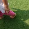 ストライプの芝生!