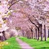 第114回文房具朝食会@名古屋は『お花見文具会in名城公園』