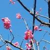 「立春」に春を感じてスタートする!