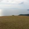 ムラサキセンブリ 都井岬の草原に咲く