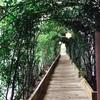 ④赤ちゃん連れの森林散歩@リゾナーレ熱海