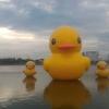 旅行記①-タイ、ウドンターニーにいるRubber Duck!