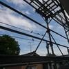 新潟 山形地震      燕増える