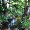 千川上水を歩く その1 玉川上水分水口から上鷺宮