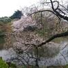 桜咲いてますね!(*^▽^*)