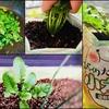 〈小太り君〉ベランダ菜園の収穫