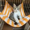 猫の多頭飼いには届け出が必要?:保護した子猫を新たな家族として迎えました(=^・^=)