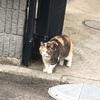 猫にとってのGW!!!