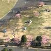 近所の公園にも河津桜が咲きました〜春近し〜