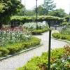 浅井山公園 咲き始めのバラ園