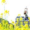 モノレール開業記念日