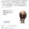 Google検索でVR動物が動く!🐎吠える!🐅飛び出す!🐈何が3Dで見られるのか?🐍