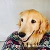犬話:冬のベッドは文鎮だらけ