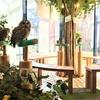 新オープンのふくろうカフェ「フクロウのお庭」に行ってみた!