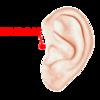 疲労やストレスなどが原因の耳鳴りによく効く耳つぼ!