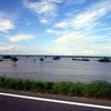 7/8(日)木曽川・長良川の状況、立田大橋周辺の東西の広場が水没していました。