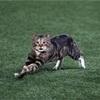 猫乱入!4月13日のプロ野球結果