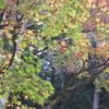 技あり!の紅葉ライトアップ 京都の旅 by Goto 2020.11.24-27 Ara-kanふたり旅 2日目〔後編〕