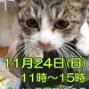 「11/24 譲渡会のお知らせ」のお知らせ