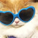 猫動画・DIY・おもしろ動画・ドローン空撮・商品レビュー