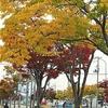 色づく街《♪街は色づくのに》