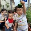 育てた野菜を収穫しました!🍅